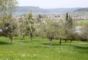 34,991 sqm of Developable Land Near Forchheim